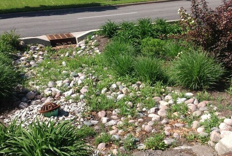 bioswale rocks median